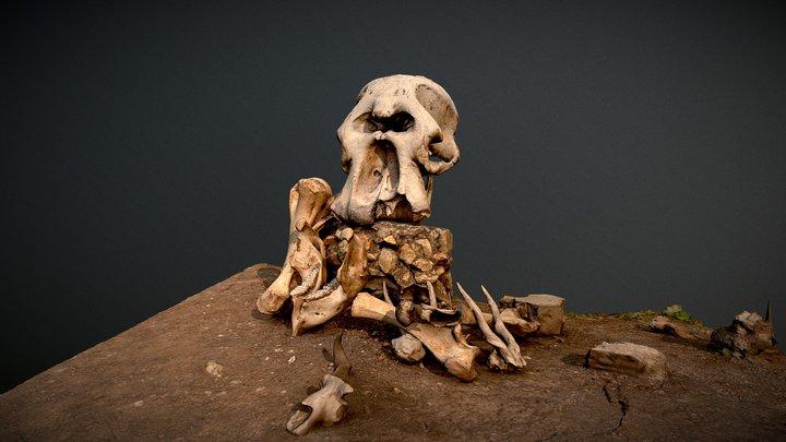 Elephant skull and bones, Tanzania 3D Model