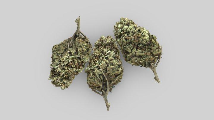 Cannabis Bud - Lemon Haze - Scan -VR/AR Ready 3D Model