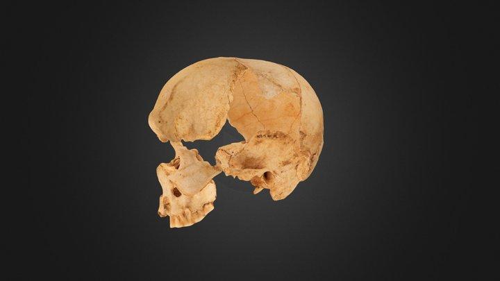 Cráneo de la Edad del Bronce 3D Model