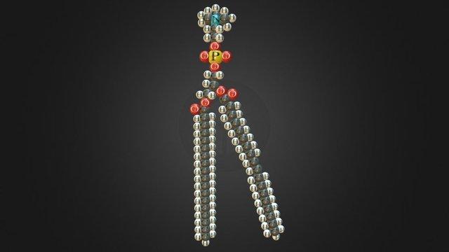 Phospholipid 3D Model