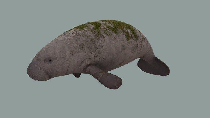 Manatee 3D Model