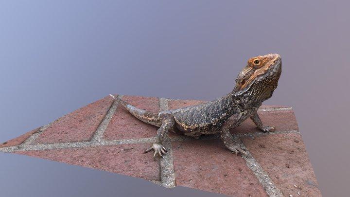 Bearded Dragon 3D Model