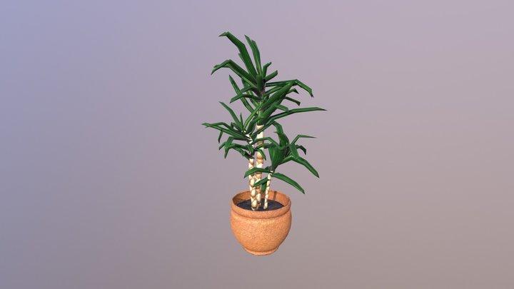 Pot plant - Dracena 3D Model