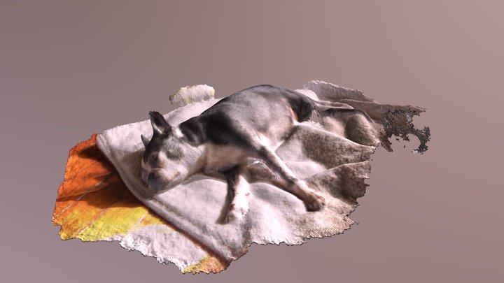 It's a ruff life (Lafitte) 3D Model