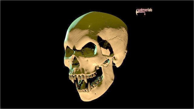 Homo vampirus – OUVC 666 3D Model