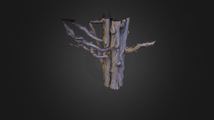 Tree02 3D Model