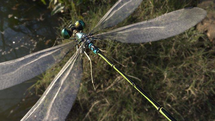 Lowpoly_Dragonfly,Lestes sponsa 3D Model