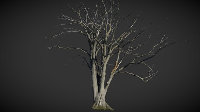 Big Dry Tree fullsize scan 3D Model