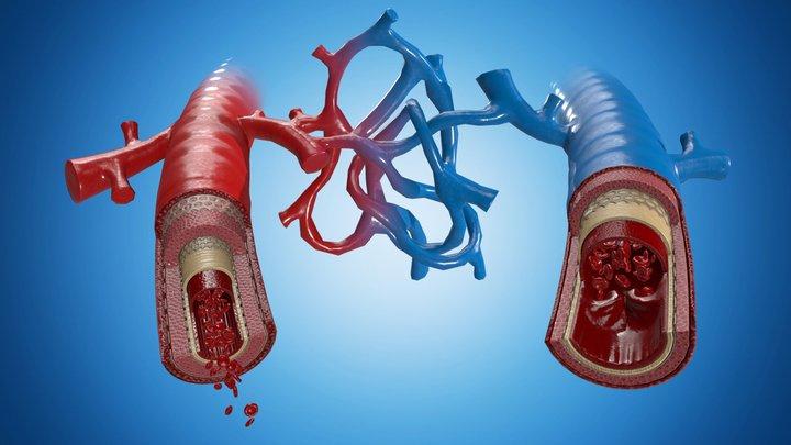 Medical view - Vein + Artery 3D Model