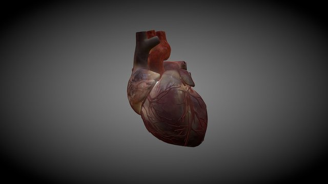 Heart cycle 3D Model