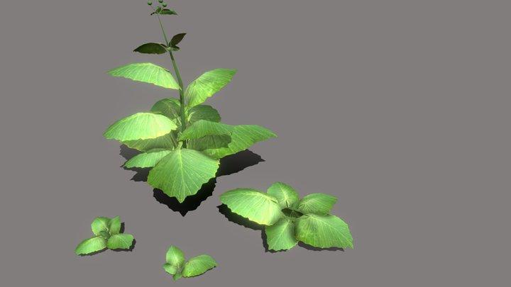 Burdock. Set of 4 plants. 3D Model