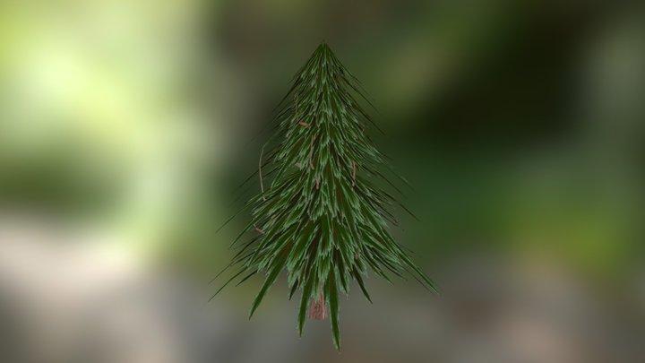 Fir Tree 2 3D Model