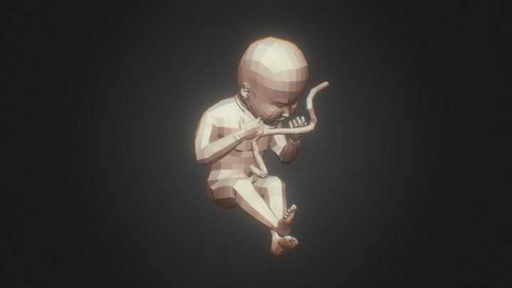 Human Fetus 3D Model