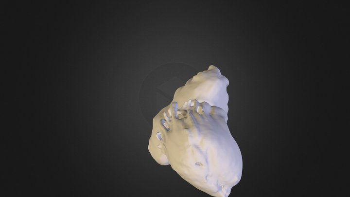 iris 3D Model