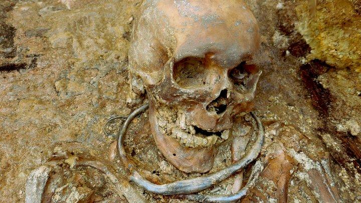 Skull 16 (Part 1: Head) 3D Model
