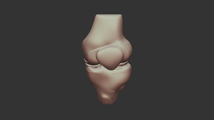 Knee 3D Model