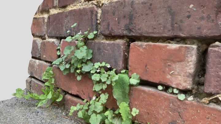 Wild plants in the city on old brick wall 3D Model