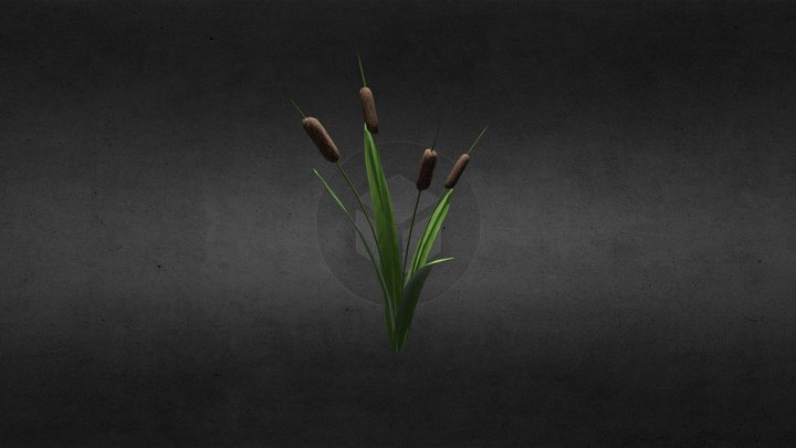 Cattail Plant 3D Model