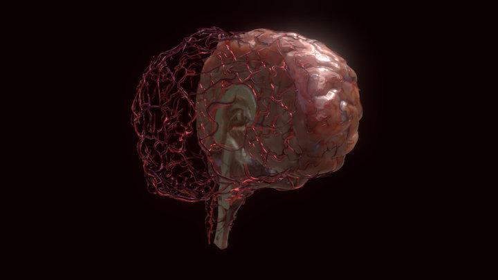 Halfbrain with vasculature 3D Model