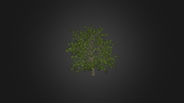 tree01 3D Model