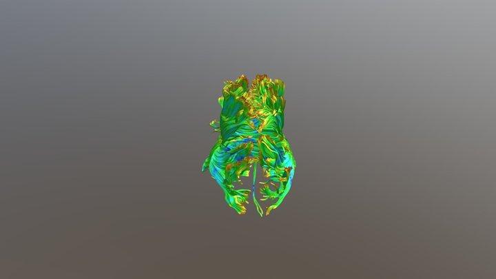 Brain DTI fibers 3D Model