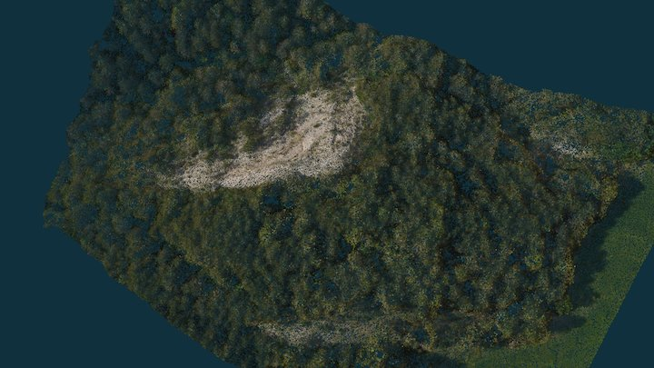 Point Cloud of Pine forest & Geology 3D Model