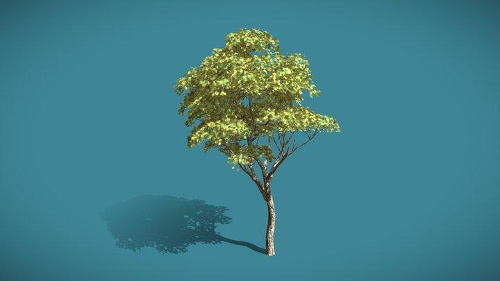 Fast Urban Tree 3D Model