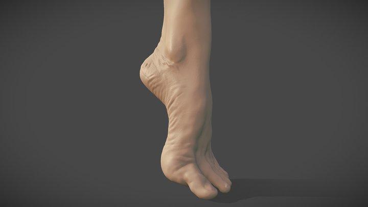 Left Foot Study 3D Model