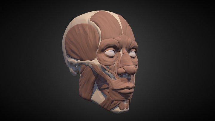 January17 Head Study: Muscles 3D Model