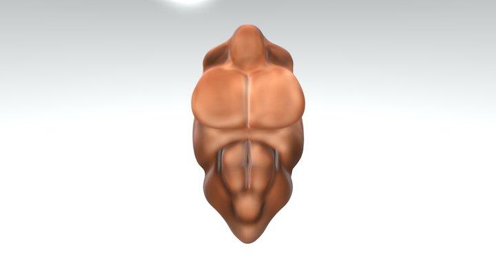 Completed Torso For Render 3D Model