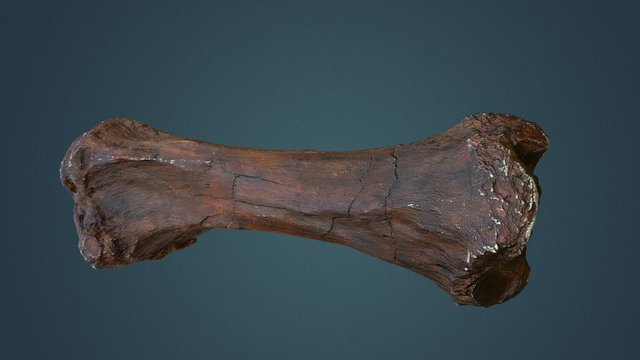 Mammoth Leg Bone 3D Model