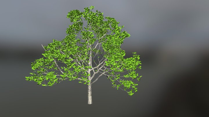 Cherry with leaves 3D Model