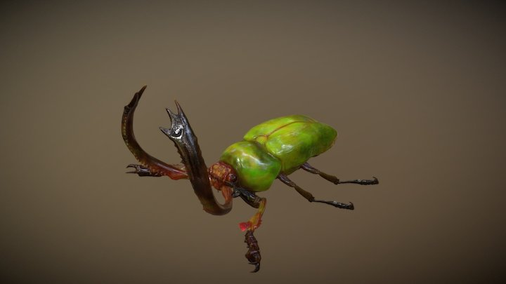 Stag Beetle Lamprima adolphinae 3D Model