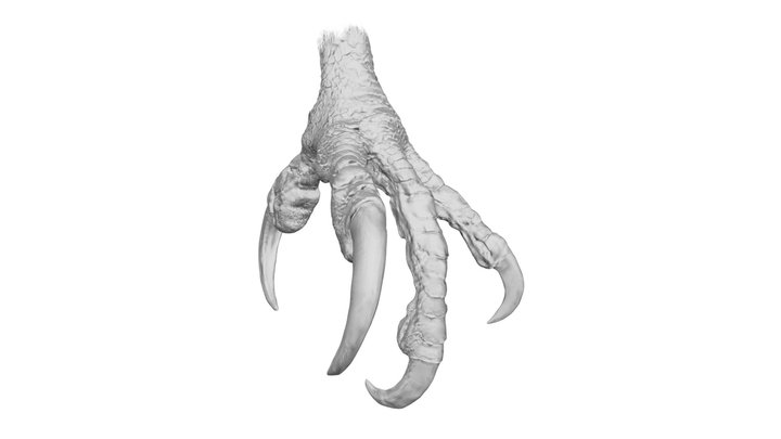 White-tailed eagle Claws 3D Model