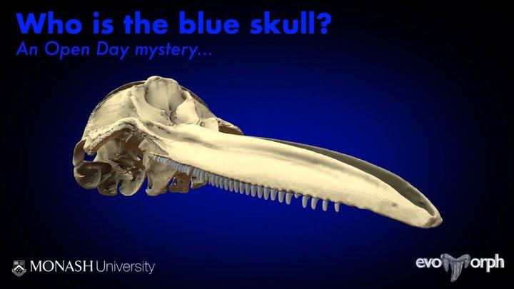 Monash Mystery Skull - Blue 3D Model