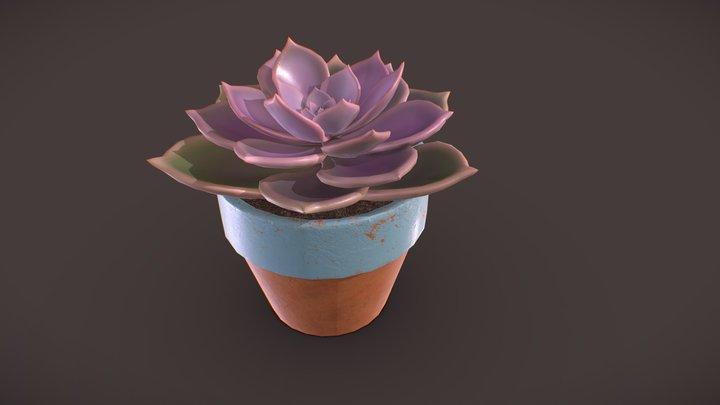 Succulent plant - Echeveria 3D Model