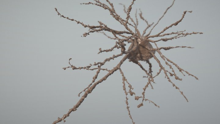 Neuron with Dendrites 3D Model