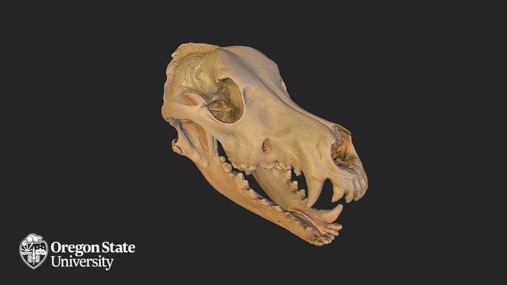 German Shepherd Skull 3D Model