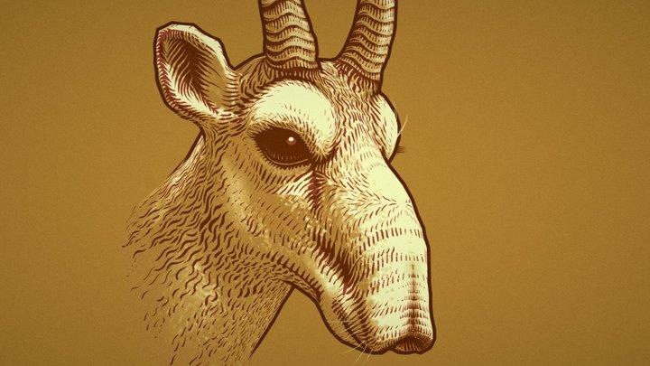 Saiga Antelope (Saiga tatarica) 3D Model
