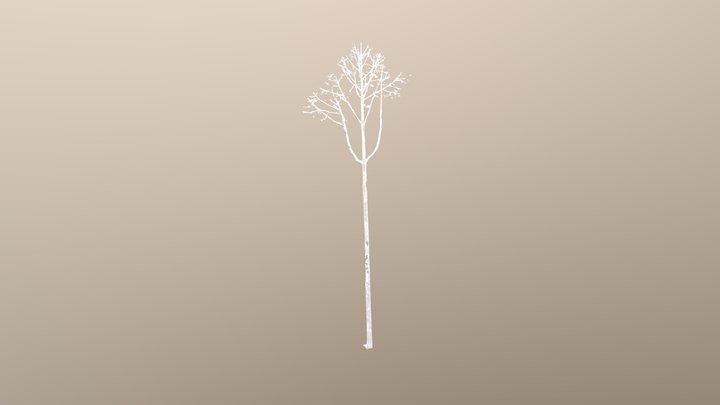 Tree 38 3D Model