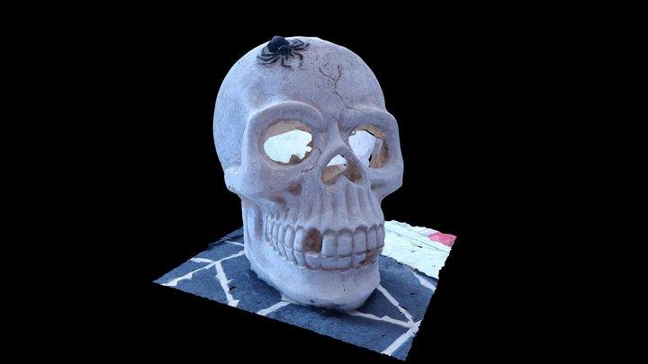 Scanned Skull 3D Model