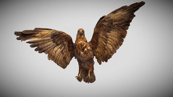 buzzard 3D Model