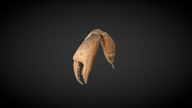 Crab, claw 3D Model