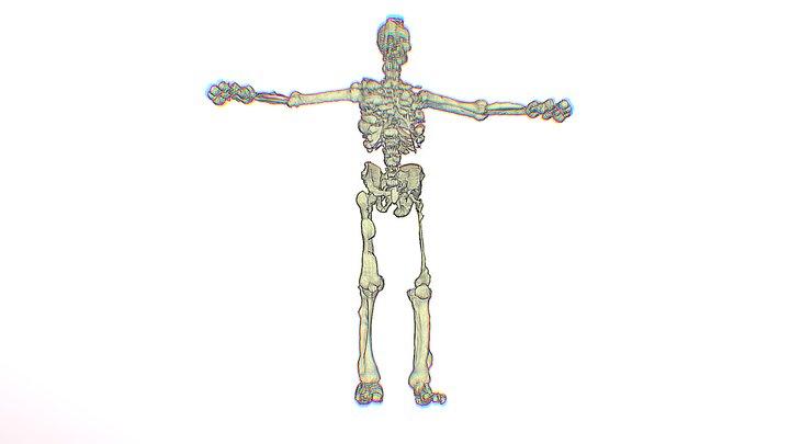Esqueleto 3D Model