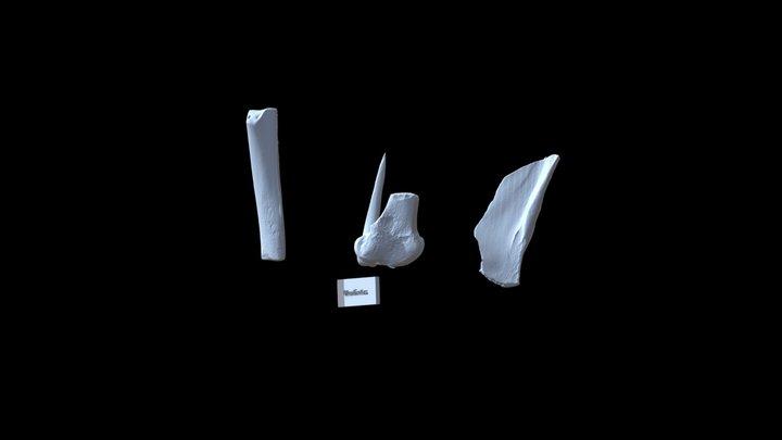 Bone Toolkit 3D Model