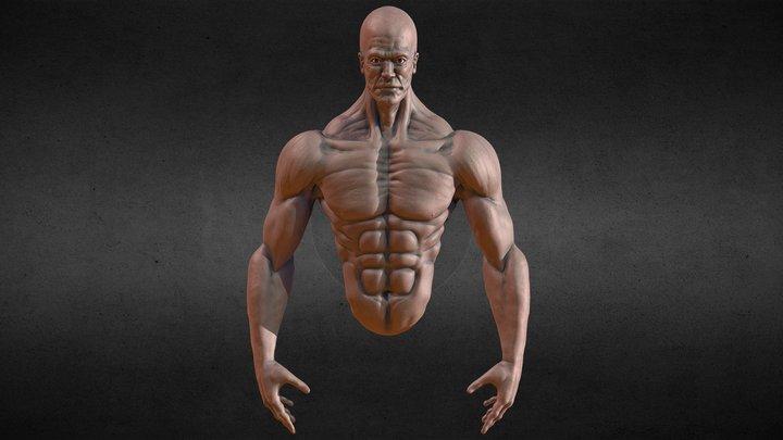 Male Anatomy Sketch 3D Model
