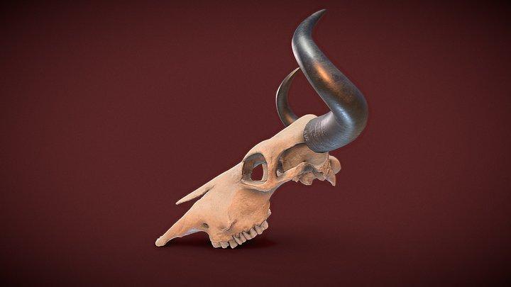 Cow Skull - Photogrammetry 3D Model