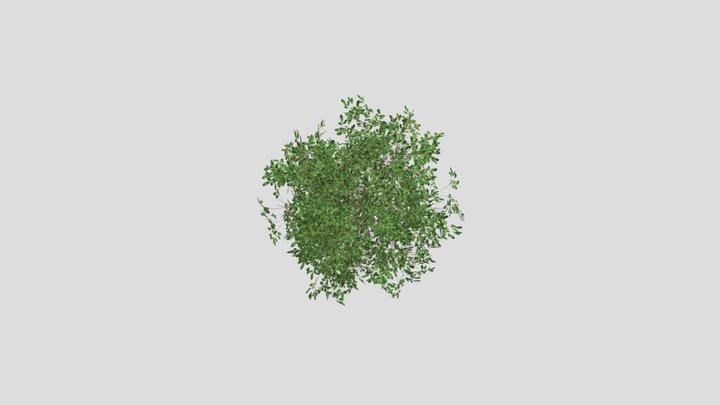 Simple Bush 3D Model