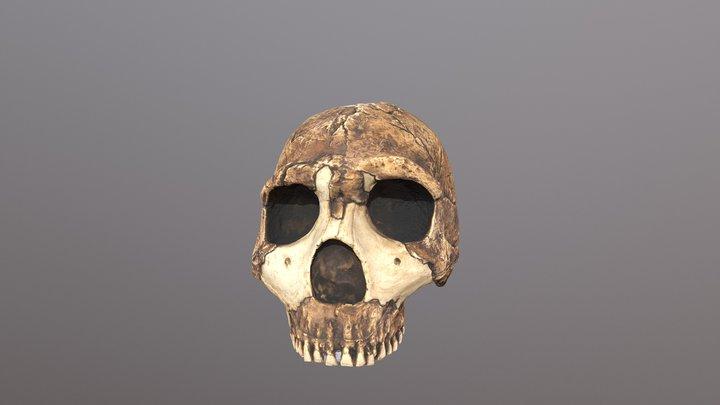 neanderthal 3D Model