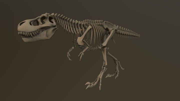 T.rex walk cycle animation 3D Model